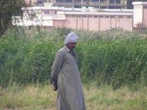 Farmer men in Dahab Islam harvesting seeds Royalty Free Stock Photography
