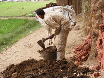 Farmer men in Dahab Islam harvesting seeds Royalty Free Stock Photos