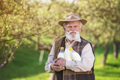 Farmer with milk bottles Royalty Free Stock Photography