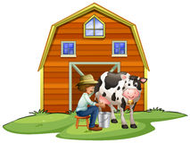 Farmer milking a cow Royalty Free Stock Photo
