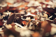 Farmer(miniature) with a fork standing , field of autumnal leaves in a garden. Stock Photography