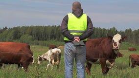 Farmer near cows at pasture stock video