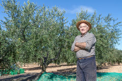 Farmer of olives Stock Images