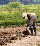 Farmer. One day at the field and a farmer named JAS was working in the fields, hoeing the soil before planting chillies, its in a little village named Kubang Royalty Free Stock Photo