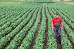 Free Farmer Or Agronomist Walking In Soybean Field And Examine Plant Royalty Free Stock Image - 55507766