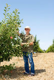 Farmer in orchard Royalty Free Stock Image