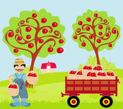 Farmer in the orchard Royalty Free Stock Photography