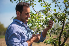 Farmer in the orchard Stock Photography