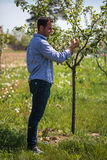 Farmer in the orchard Stock Image