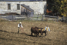 Farmer with Oxen Royalty Free Stock Images