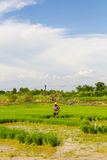 Farmer paddy fields Stock Photos