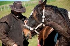 Farmer patted horse Royalty Free Stock Photos