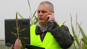 Farmer with PC and cell phone on the corn field stock footage
