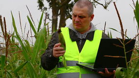 Farmer with PC and corn on the field stock video