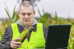 Farmer with PC and corn in the hands on the field Royalty Free Stock Image