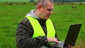 Farmer with PC near the cows at pasture stock footage