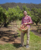 Farmer with peaches. Young farmer with freshly picked basket of peaches Stock Image