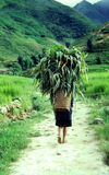Farmer in the Phillipines. A hard days work on the farm Royalty Free Stock Photos