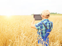 Farmer photographing wheat plant in field, using  at tablet.  Wh Royalty Free Stock Photography