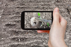 Farmer photographs the loosening of ground by hoe Royalty Free Stock Image