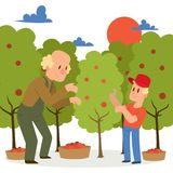 Farmer picking apple harvest to baskets banner vector illustration. Young and old male character harvesting ripe fruit. From organic tree. Country garden royalty free illustration