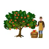 Farmer picking off apples stock illustration