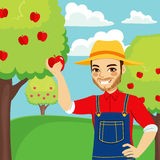 Farmer Picking Red Apple. Young farmer man picking red apple from tree Royalty Free Stock Photos