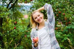 Farmer picking ripe fruit from tree. Harvesting season concept. Woman hold apple garden background. Farm produce organic. Natural product. Girl rustic style royalty free stock image