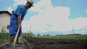 Farmer picks up a piece of plant and throws it into the vegetables on the field stock footage