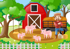 Farmer and pigs in the field Stock Photo