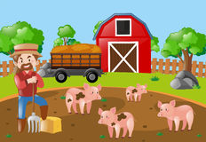 Farmer and pigs in the mud field Stock Image