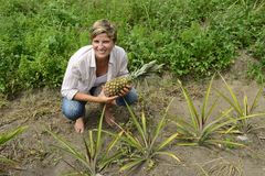 Farmer in pineapple plantation Stock Photo