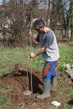 Farmer Planting Fruit Tree 5 Stock Photos