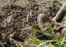 Farmer planting money. Royalty Free Stock Photo