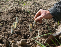 Farmer planting money. Royalty Free Stock Images