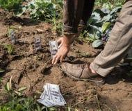 Farmer planting money Royalty Free Stock Photos