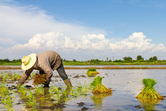Farmer planting Stock Photos