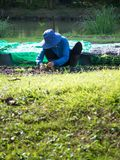 Farmer is planting seedlings in plots. The front is green grass. The back is a pond for cultivation.  Stock Image