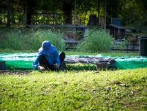 Farmer is planting seedlings in plots. The front is green grass. The back is a pond for cultivation Stock Photography