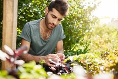 Close up portrait of young good-looking caucasian man in blue t shirt concentrated working in his countryside garden in. Farmer planting young seedlings of Royalty Free Stock Photos