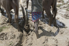 A Farmer plough land for cultivation Stock Photos
