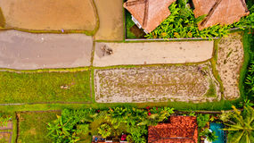 Farmer ploughing a rice paddy. Farmer ploughing a rice paddy in Bali, Indonesia, Asia. Aerial view stock image