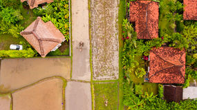 Farmer ploughing a rice paddy. Farmer ploughing a rice paddy in Bali, Indonesia, Asia. Aerial view stock photos