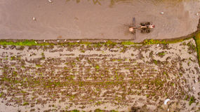 Farmer ploughing a rice paddy. Farmer ploughing a rice paddy in Bali, Indonesia, Asia. Aerial view stock photography