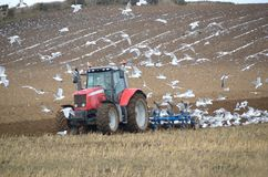 Farmer ploughing with seagulls following. Stock Photo