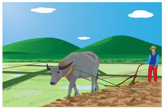 Farmer plow con paddy field. Design Stock Photo
