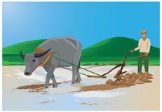 Farmer plow con paddy field Stock Image