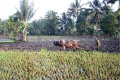 Farmer Royalty Free Stock Image