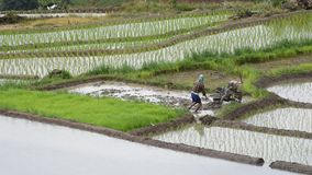 Farmer plowing the fields. CHIANG MAI, THAILAND - JULY 24: Farmer plowing the fields with a motor-powered plow in Rice terraced at Pa Bong Piang village, Mae stock footage