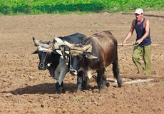 Farmer plowing his field in Cuba Royalty Free Stock Photography